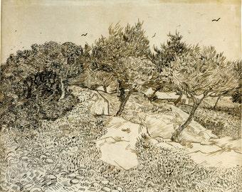 Van Gogh Reproduction.  Olive Trees, 1888 by Vincent van Gogh, Fine Art Print.
