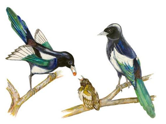 LIMITED EDITION (10) Magpies, Pica Pica, Magpie Family, Pie Bavarde, Urraca, Elster, Gazza, Snag Breac, Korea National Bird