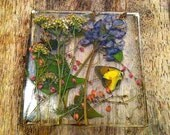 Preserved Nature Resin Wall Decor, Window Hanging. Yellow Butterfly, Pressed Flower Art.