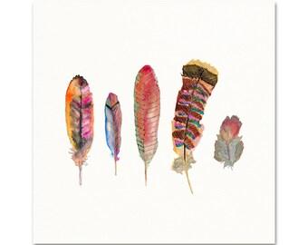 Autumn Feathers.