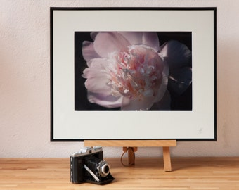Pink Peony Flower Photograph with black frame