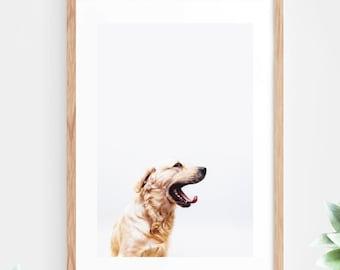 Dog Printable Wall Art Instant Download Animal Photo Photography Wall Decor Modern Minimalist Wall Art Printable Poster Contemporary Dog