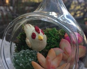 Chicken in the Woods Succulent Terrarium