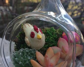 Chicken in the Woods Succulent Terrarium