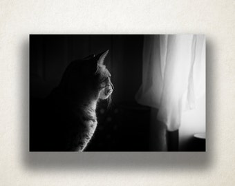 Cat Staring Out Window Canvas Art, Cat Wall Art, Artistic Animal Canvas Print, Artwork, Photograph, Canvas Print, Home Art, Wall Art Canvas