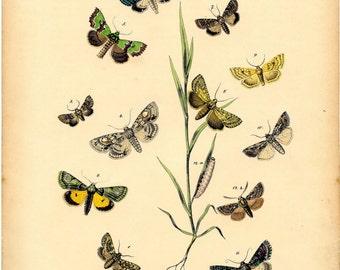 Wall decor butterfly, Nature art, Butterfly art, Nature print, Butterfly decor, Nature picture, Butterfly print, Nature decor, 167