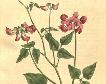 Nature, Botanical art, Flower print, Wall decor, Nature art, Nature decor, Flower print art, Antique print, Flower art, Vintage print, 380