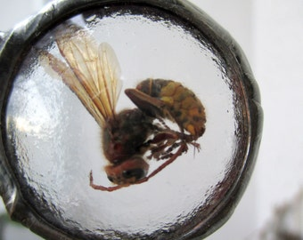 Real Hornet Necklace, Necklace with real hornet , Terrarium Necklace, Necklace Hornet