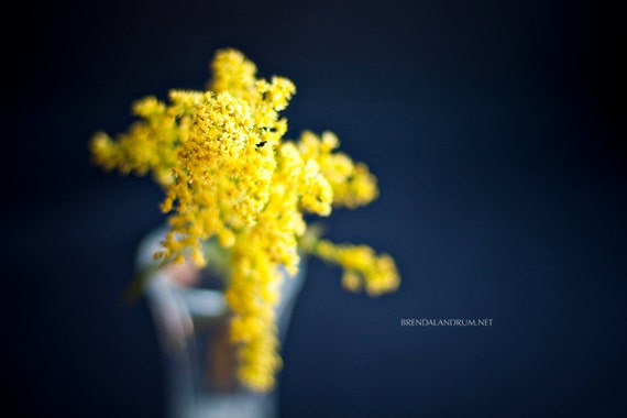 Yellow Bloom in Glass Vase with Navy Background -- Floral Fine Art Photography, Home Decor, Wall Art, Flowers, Print