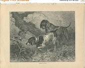 SALE Vero Shaw - Antique Dog Print - Original lithograph  - 1881 Book Of The Dog - German Pointers