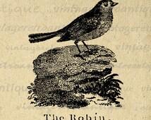 Digital Graphic The Robin Printable Antique Illustration Download Image Vintage Clip Art Jpg Png Eps 18x18 HQ 300dpi No.902