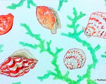 Coral with Shells