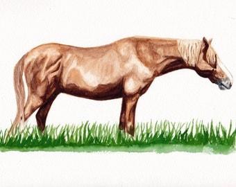 ORIGINAL: Chincoteague Pony Stallion Ken Watercolor