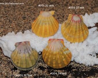 Hawaiian Sunrise shell