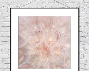 Nature Photography, Original Artwork, Trending Art, Blush Art, Blush Pink Wall Decor, Dandelion Wall Art, Bedroom Art, Living Room Decor