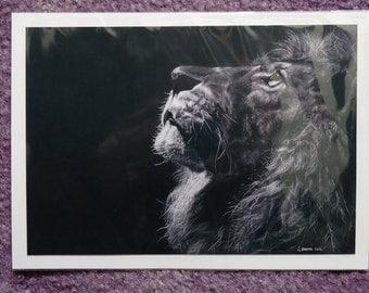 Lion Drawing Print