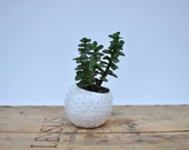 Ceramic planter/ air planter/ succulent planter/ flower pot/ white pot/ ceramic flower pot/ sea urchin