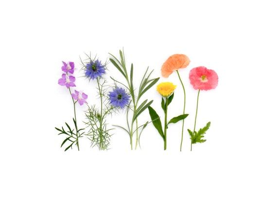 Rainbow of garden flowers ~ note card ~stationery ~ poppies, calendula, nigella, larkspur, lavender