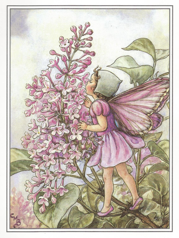 The Lilac Fairy Cicely Mary Barker Flower Fairies Vintage