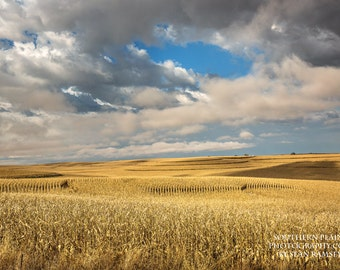 Iowa Photography, Corn Fields, Farm Print, Golden Landscape, Iowa Pictures, Decor for Home, Rural Art Print, Photo Print, Apartment Decor