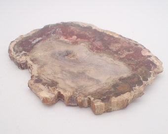 Petrified Wood Slab | Madagascar