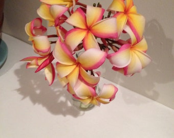 RAINBOW Plumeria CUTTINGS & ROOTED Purchase includes Growing Guidelines and Plant Food!  Beautiful Colorful Frangipani