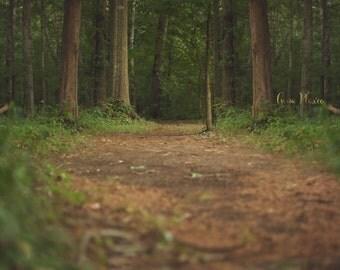 Forest Path Digital Backdrop
