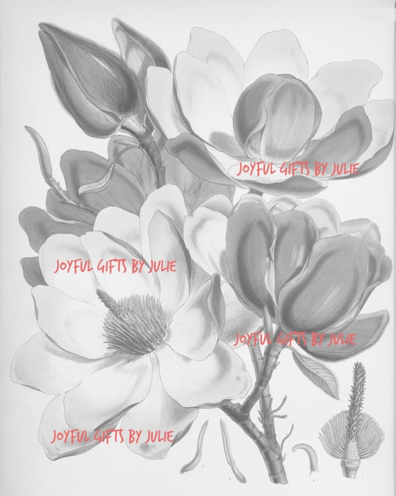 4 Vintage Flower Coloring Book Page Poster Grayscale