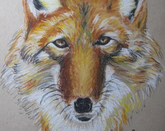 Coyote - medicine animal,  in charcoal and conte crayon