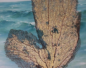large Natural Yellow & Black Gorgonian SEA FAN Coral from Puerto Rico (#9)