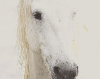 White Horse Photography - Digital Photography - Wild Horse Photography, Horse Art, Horse Decor, Neutral Horse Art, Horse Decor, Pastel Horse