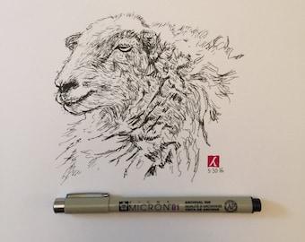 KillerBeeMoto: Pen Sketch of Sheep