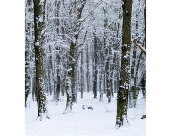 Winter Birch Trees Photo Backdrop