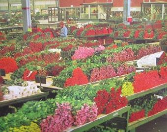 Flower Market Postcard, Aalsmeer Cut Flower Market, Vintage Postcard, Holland Flower Market, Floral Picture Postcard, Dutch Flower Card