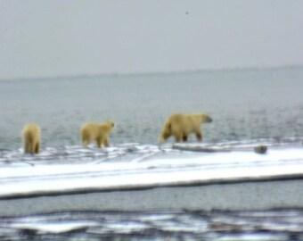 Minamal Polar Bear Totem
