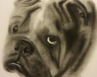 Custom Pet Portrait Charcoal Drawing 11x14
