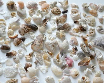 Pacific Ocean treasury, sea glass, sea stones, corals, shells