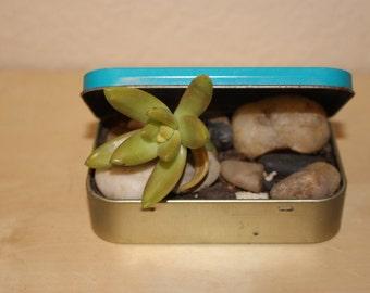 Tiny Planter - Altoids Tin