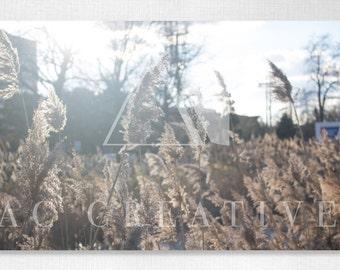 Open Fields | Photography Print | Wall Art | Nature Photography