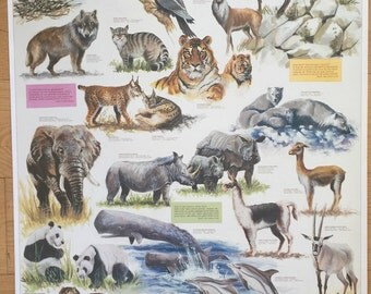 Hobby Poster Chart Endangered Species Poster 27 x 39 made in Italy