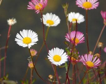 Nature Based Photography