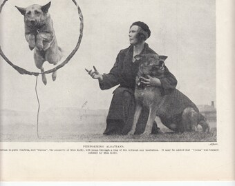 "Performing Alsatians/Shepherds 1937 Print / Jump Through  A Ring/8"" X10.5"""