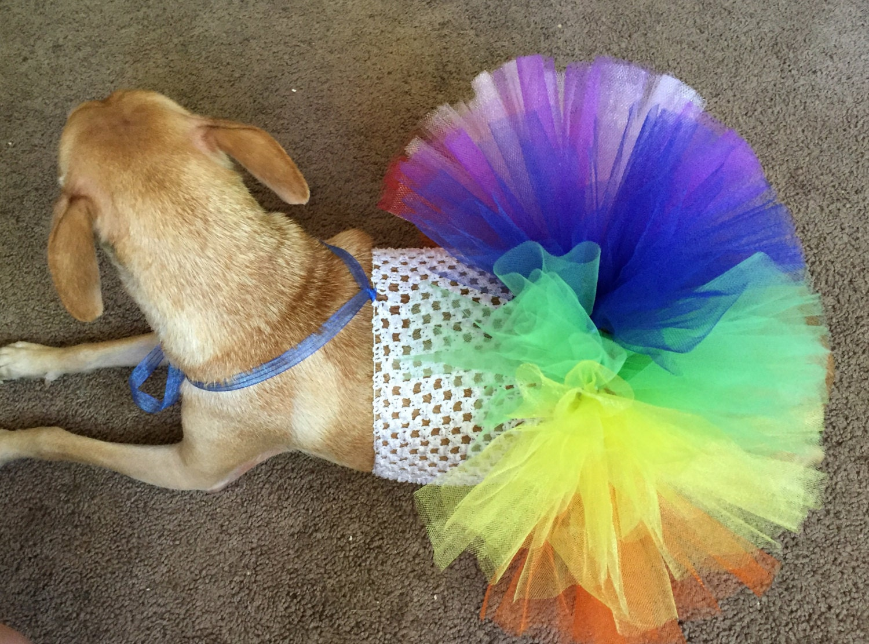How To Make A Dog Tutu Collar