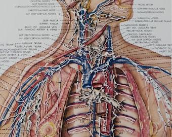 Vintage medical poster lymphatic system