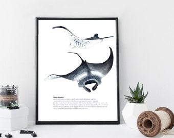 Manta ray art print, nautical art print , watercolor marine art, illustration, home wall decor, modern apartment decor, gift, marine animal