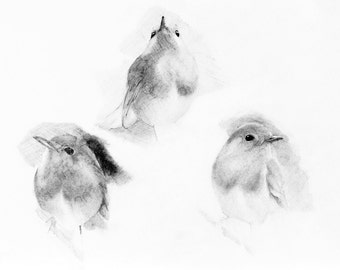 Instant digital download of the original drawing entitled 'Robins' by Thomas Harrison.