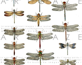 Dragonfly Collage Sheet. Dragonfly Chart. Insects Illustration. Digital Dragonfly Download. Vintage Dragonflies Printable.