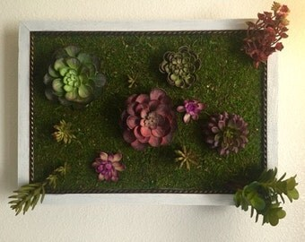 Succulent Wall Garden Frame