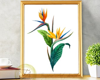 Floral Tropical Art Decor, Bird Of Paradise Plant, Botanical Wall Art, Wall  Art