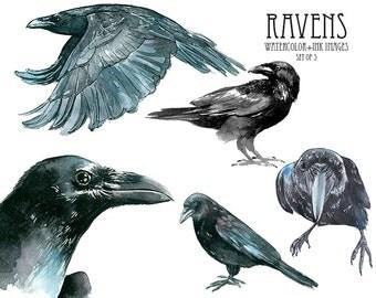 Raven clipart Watercolor crow clipart Watercolor clip art Bird clipart Watercolor bird